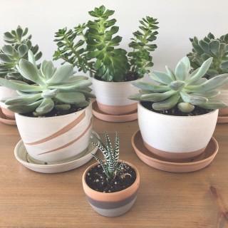 Ceramics Shiralee Pottery